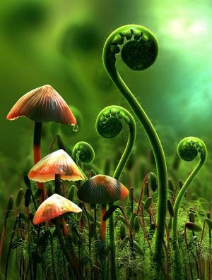 plantas 3D