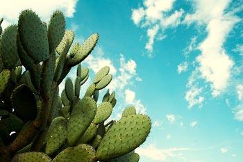 true sky mexico