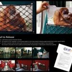 publicidad para el cuidado de los animales
