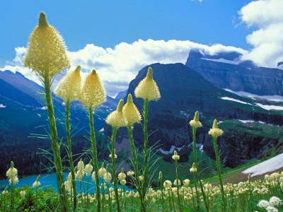 beargrass-grinnell-lake-glacier-national-park-montana