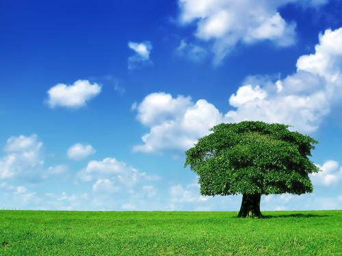 lone tree 1600 100+ fondos de pantalla de paisajes naturales