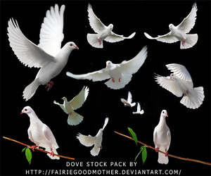 white dove stock pack by fairiegoodmother 100+ archivos PSD para descargar gratis