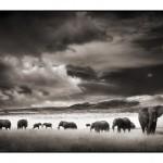 015_elephant-herd