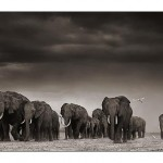 05_elephants-egrets-after-st