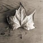 fotos-blanco-y-negro-4