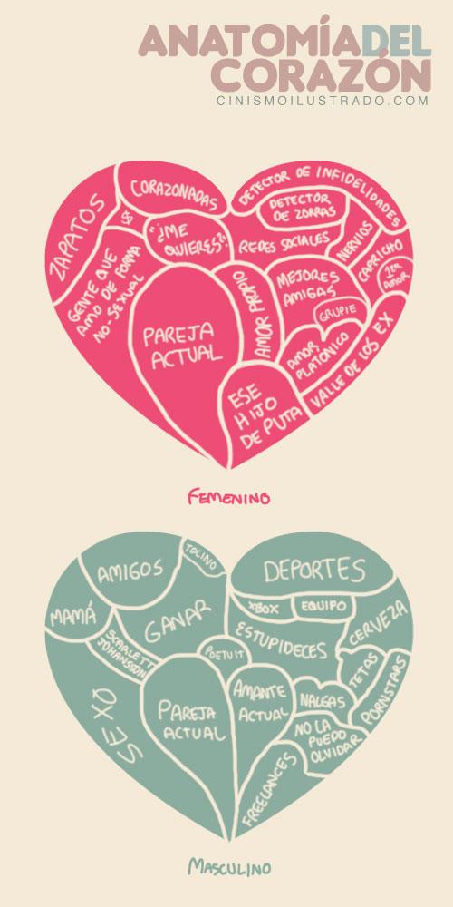 Anatomia del corazón #humor, excelente ilustración - Frogx Three