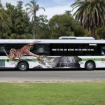 perthzoo-bus.preview