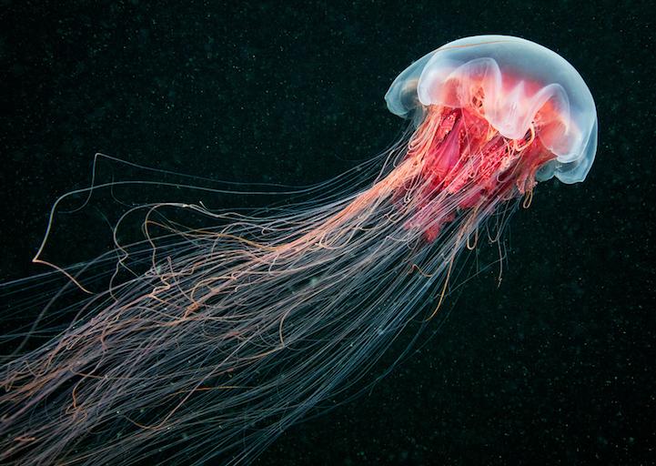fotografias medusas 1
