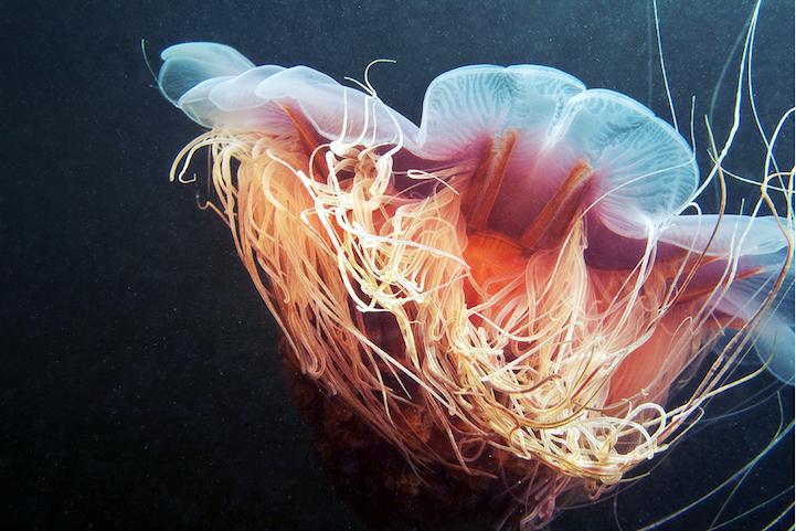 fotografias medusas 2