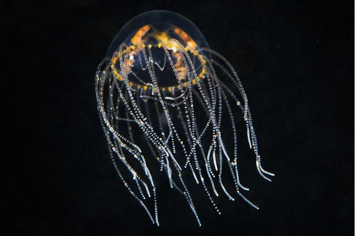 fotografias medusas 4