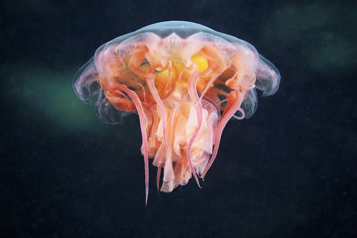 fotografias medusas 5
