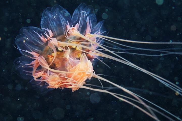 fotografias medusas 6