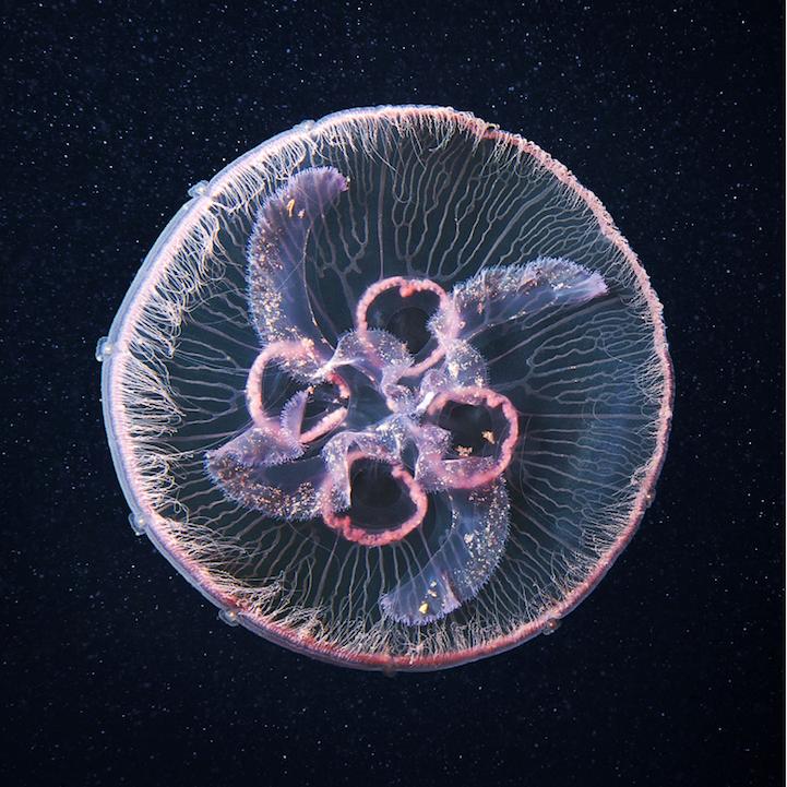 fotografias medusas 7