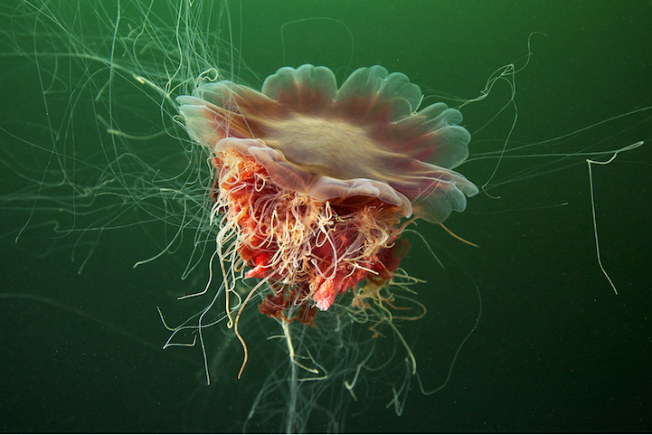 fotografias medusas 8