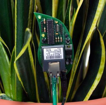 580470 549840928362326 1795188246 n Tecnología: Plantas que utilizan Twitter para Comunicarse
