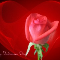 Valentine-Day-Wallpapers-13