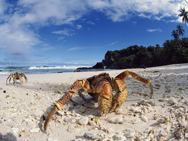 cangrejos Increibles fotografias de playas