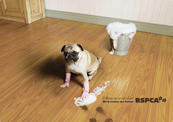 publicidad graciosa con perros 10