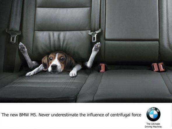 publicidad graciosa con perros 12