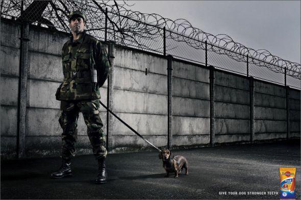 publicidad graciosa con perros 14