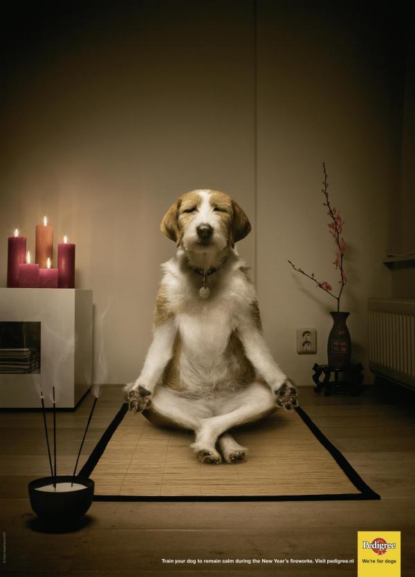 publicidad graciosa con perros 15