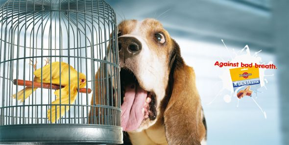 publicidad graciosa con perros 16