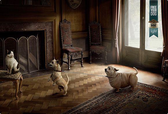 publicidad graciosa con perros 2