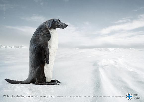 publicidad graciosa con perros 4