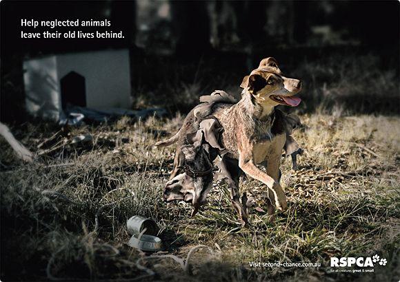 publicidad graciosa con perros 5