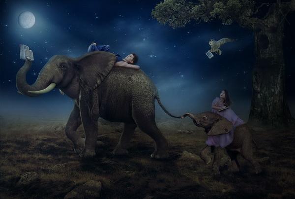 foto manipulada surreal elefante