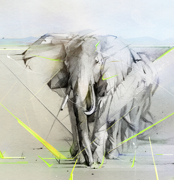 dibujos con lapiz grafito elefante