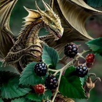 Blackberry-dragon