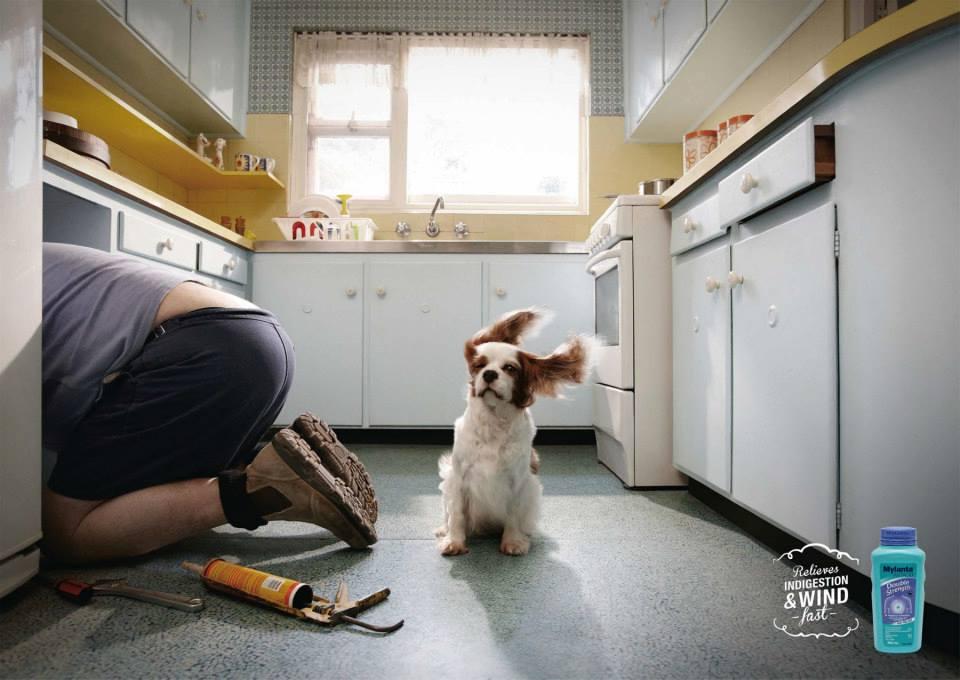 campaña publicitaria jwt perro