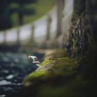 maravillosas-imágenes-surrealistas-de-un-fotógrafo-de-14-años-16