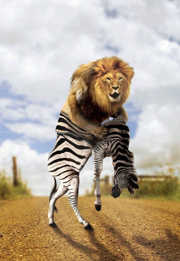 fotos manipuladas leon de cebra