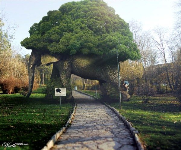 fotos manipuladas tunel de elefante