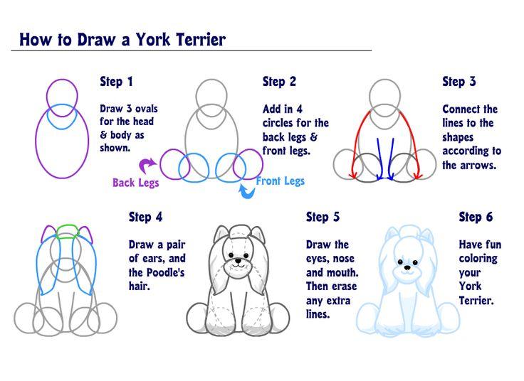 Como dibujar osos