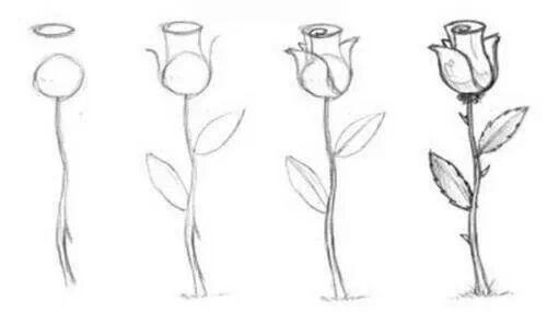 Como dibujar rosas