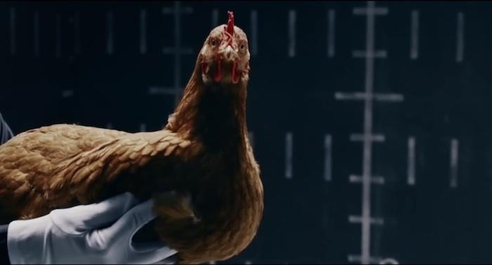 Publicidad de Mercedes-Benz con gallinas
