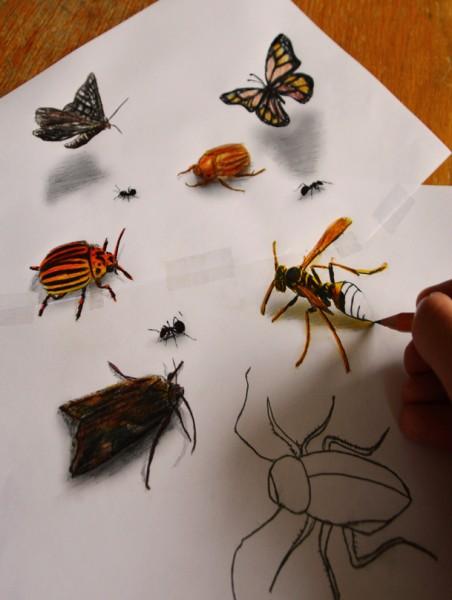 Dibujos de insectos 3D (mariposas, avispas, escarabajos, etc)