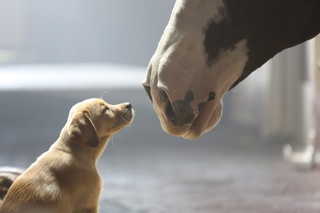 budweiser-puppy-love-hed-2014