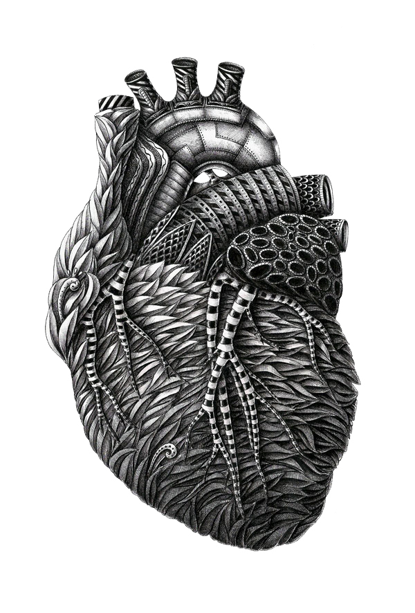 ilustraciones Alex Konahin corazon