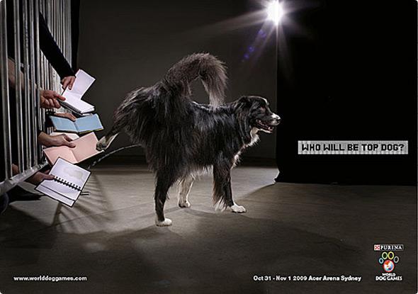 imágenes de publicidad purina