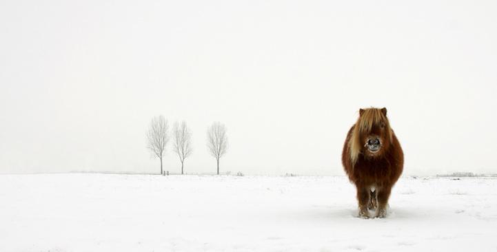 Naturaleza y vida salvaje por Gert van den Bosch
