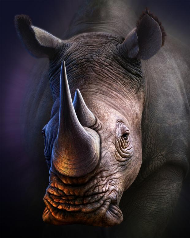 ilustraciones de animales rinoceronte