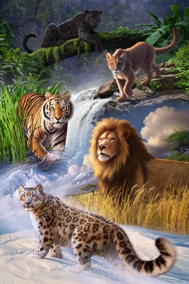 ilustraciones de animales tigre leon leopardo