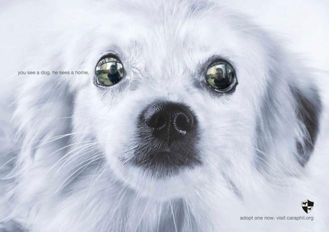 carteles en contra del maltrato de animales 21