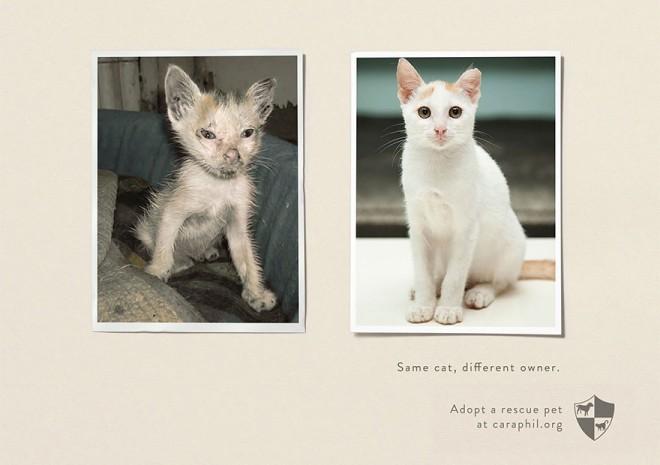 carteles en contra del maltrato de animales 28