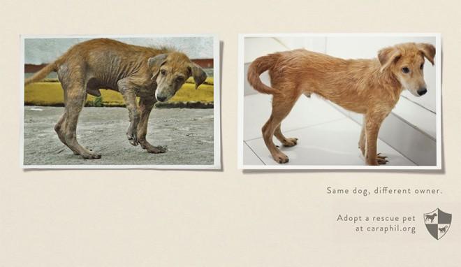 carteles en contra del maltrato de animales 29