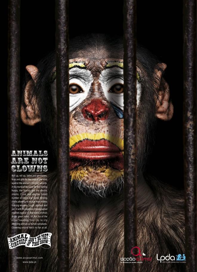 carteles en contra del maltrato de animales 4